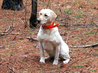 Dogs helped with Pine Tree Disease: Nine Ways How Special Dogs are Helping Children with Special Needs